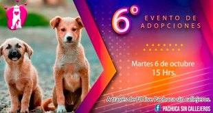 Animalistas Pachuca evento virtual adopciones