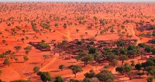 Descubren millones árboles desierto Sahara