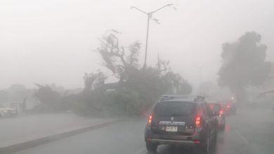 Lluvia y viento derrumban árbol en centro de Tizayuca