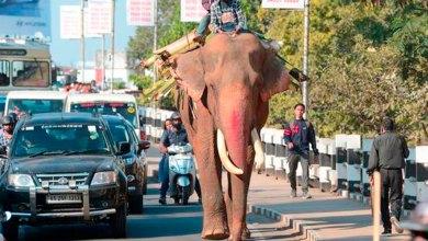 elefante India mató 16 personas