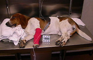 Image result for dog hooked up to IV
