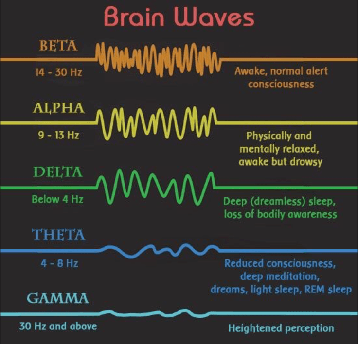 EEG Waveforms