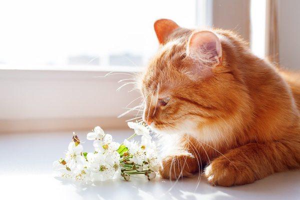 atlanta cat sitting services