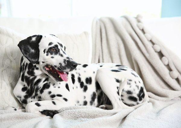 Gainesville, Georgia Dog Sitting Company / Service