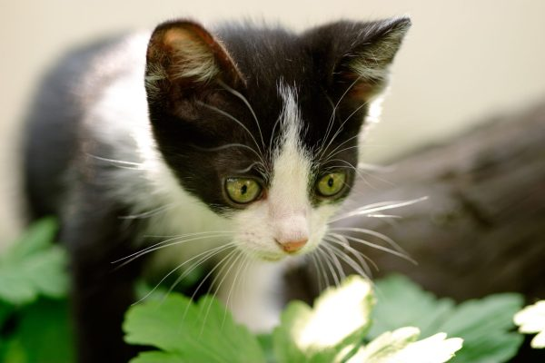 cat sitter atlanta