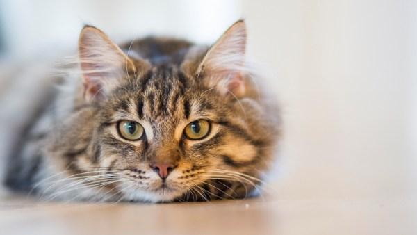 cat sitters atlanta