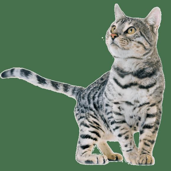 catR03