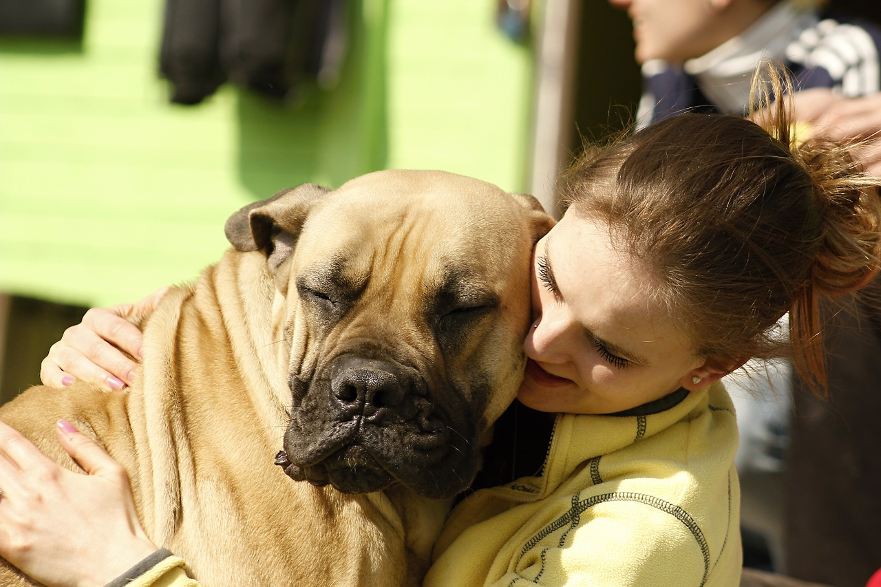 mastiff dog cuddles contect girl happy Critter Caretakers Pet Services Quality Pet Sitting vs Quantity Pet Sitting