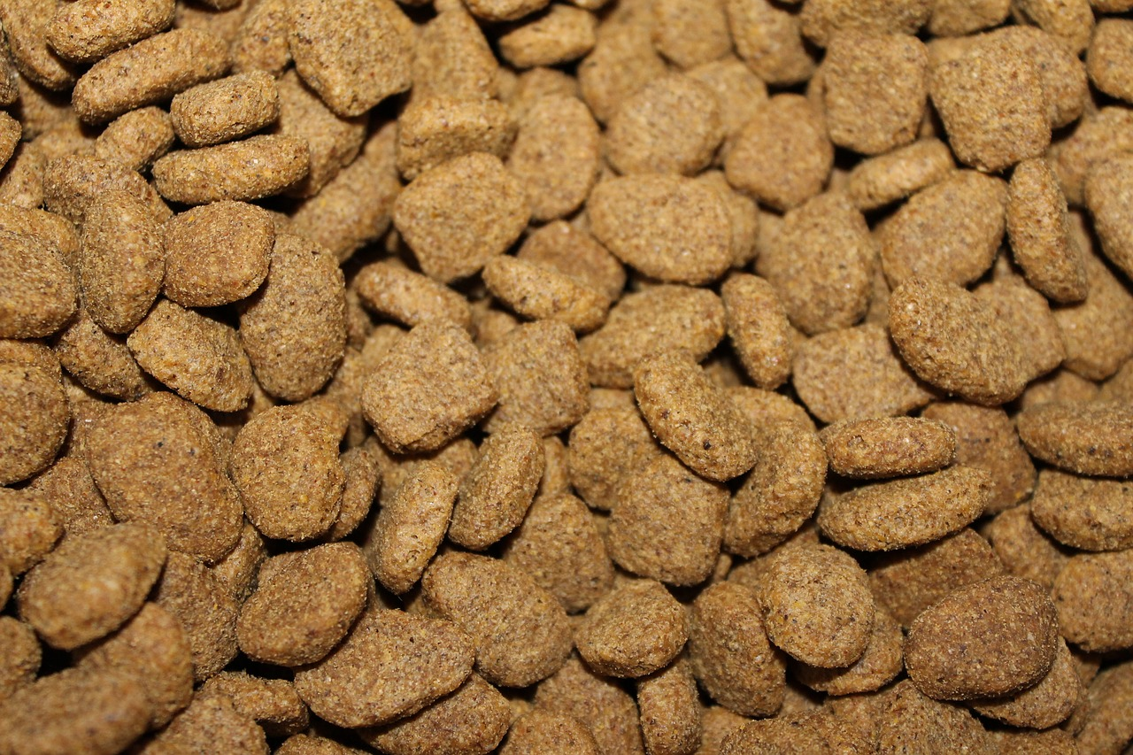 dog food kibble Critter Caretakers Pet Services What Does A Mesa Pet Sitter Do If Your Dog Won't Eat?
