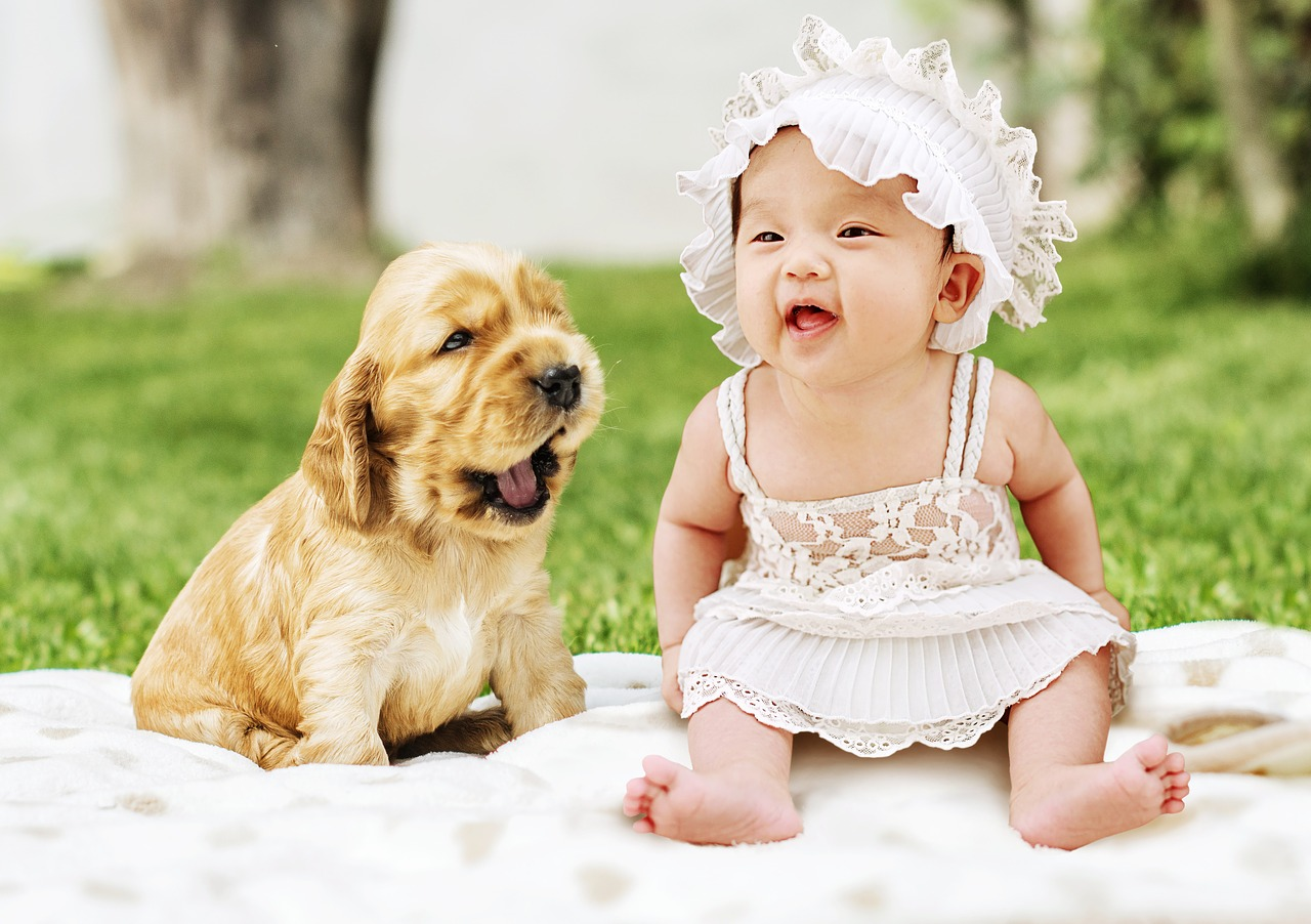 dog baby pivnic Critter Caretakers Pet Services Dogs + Babies = Trouble?