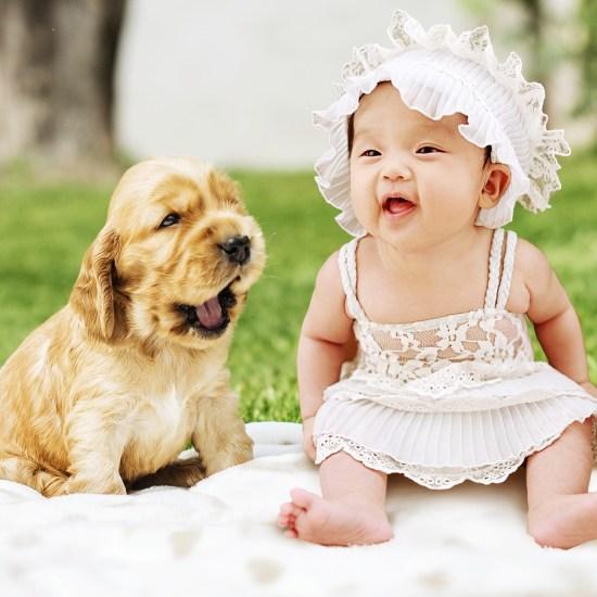 dog baby pivnic Critter Caretakers Pet Services Mesa Dog Walker Discusses Pet Smart Dog Treat Recall
