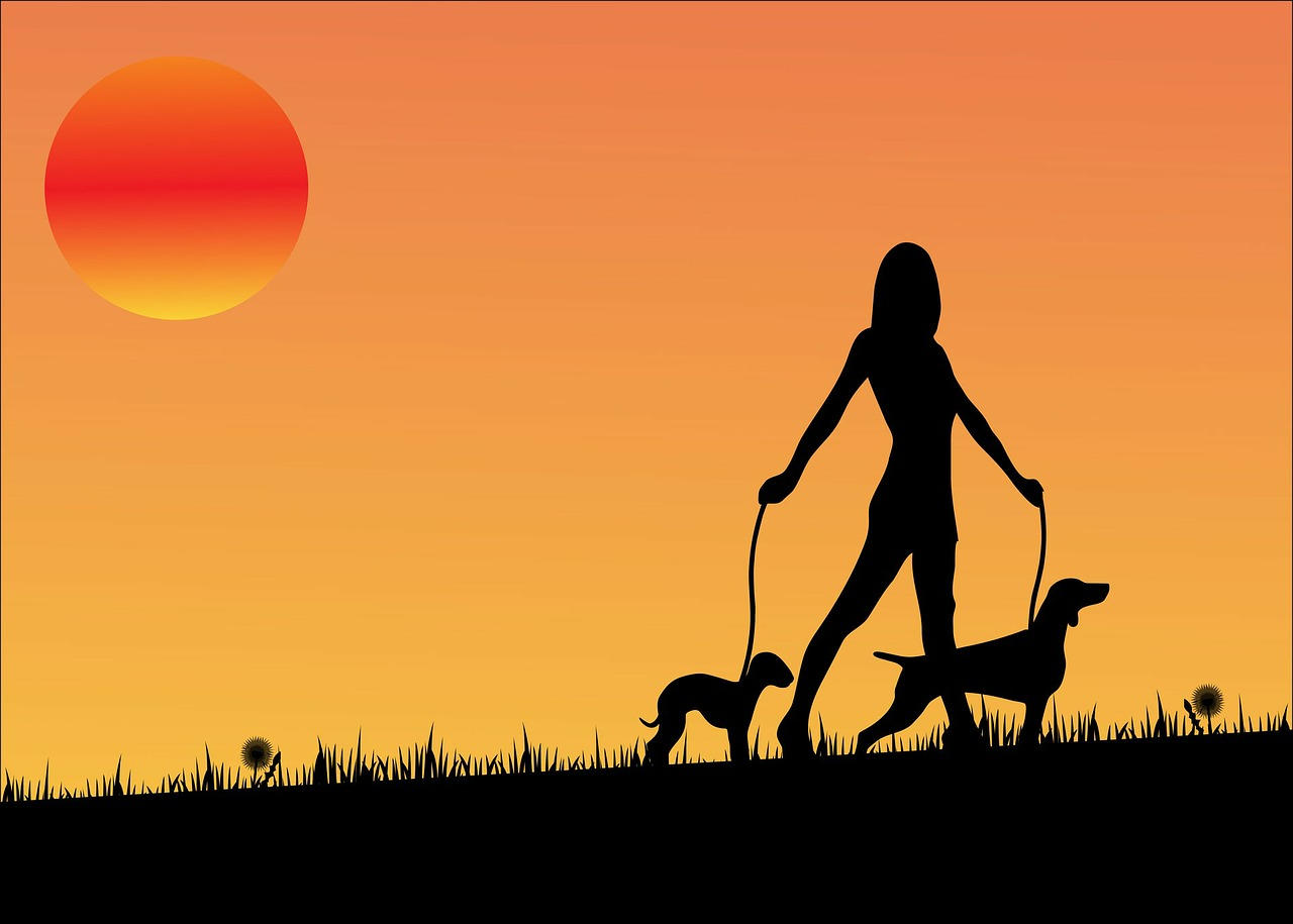 sunset pet sitting tempe dog walk Critter Caretakers Pet Services We're Now Pet Sitting in Tempe!