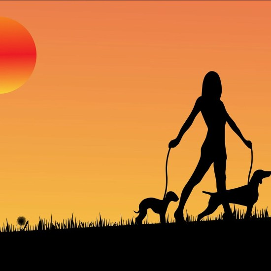 sunset pet sitting tempe dog walk Critter Caretakers Pet Services The Ridiculous Things We Do With Your Pets When You Aren't There...