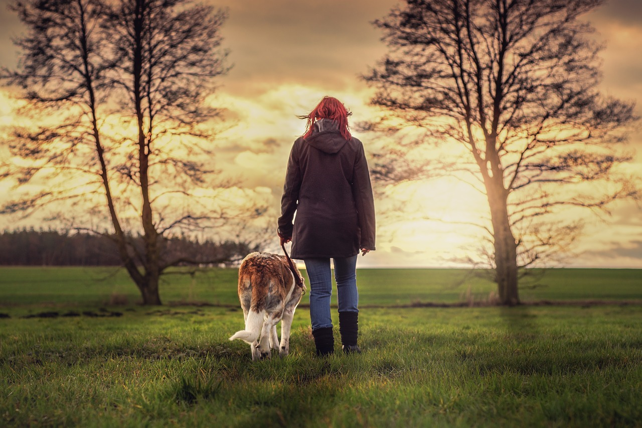 dog walking grass landscape Critter Caretakers Pet Services The Do's and Don'ts of Dog Walking