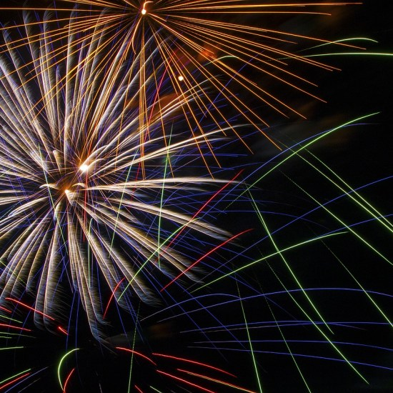 fireworks 4th july Critter Caretakers Pet Services Top Ways Your Cat Shows They Love You