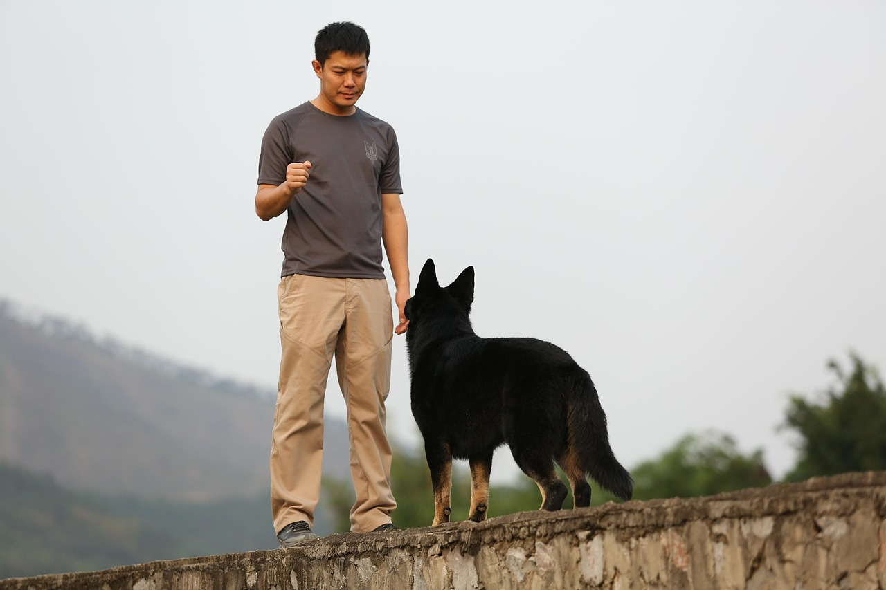 shepherd dog training Critter Caretakers Pet Services Positive Reinforcement Training: What Is it? And Is It For You?