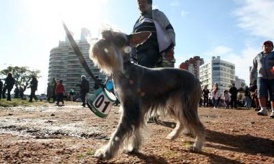 El primer perro diagnosticado con COVID-19 falleció a mediados de julio. (Foto: EDE)