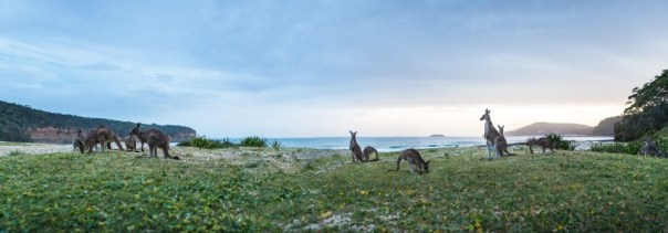 Shoalhaven Beach Australia