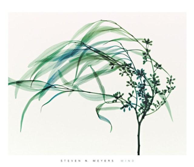 sandra almeida diseño gráfico vigo radiografias de plantas2
