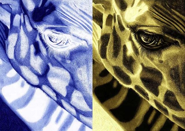 Positivo 5, Girafa