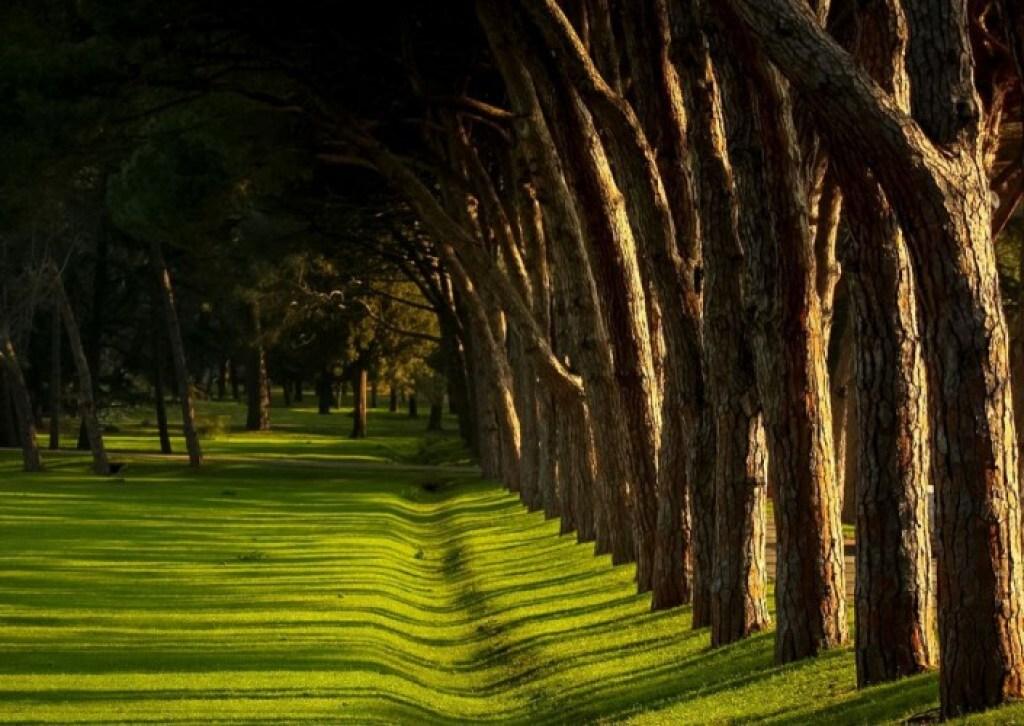 Holm Oak, Brijuni