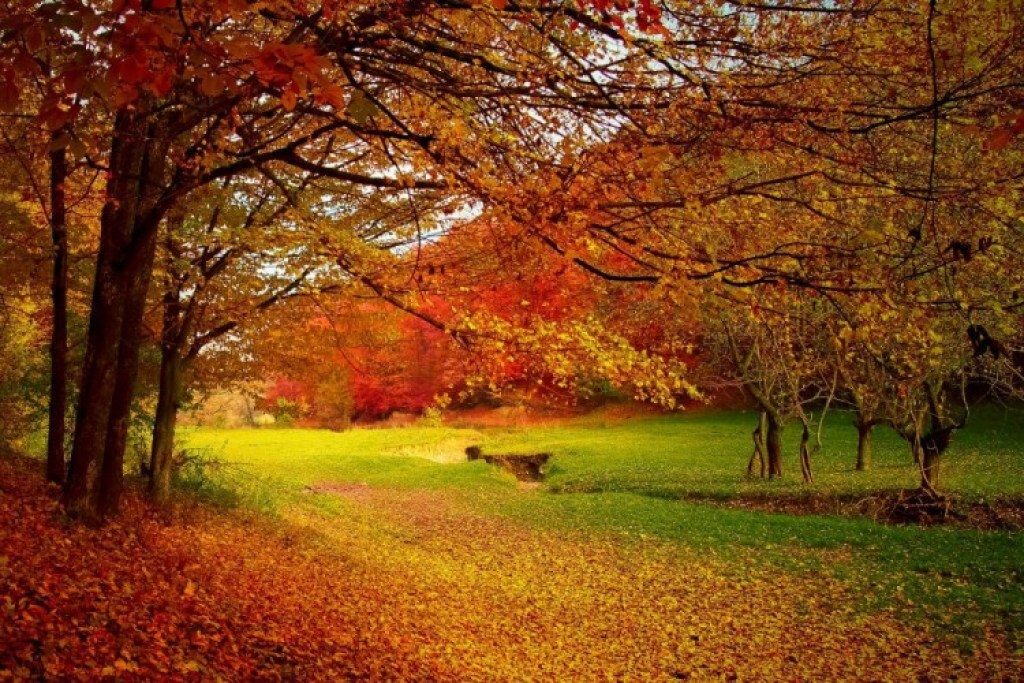 Colors in Nature, Autumn Holidays
