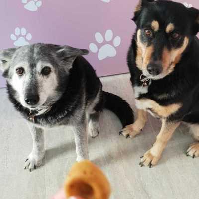 chiennes-hello dog-salon de toilettage-revendeur-babines-france