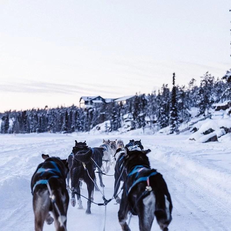sport-canin-pulka-ski-neige-luge