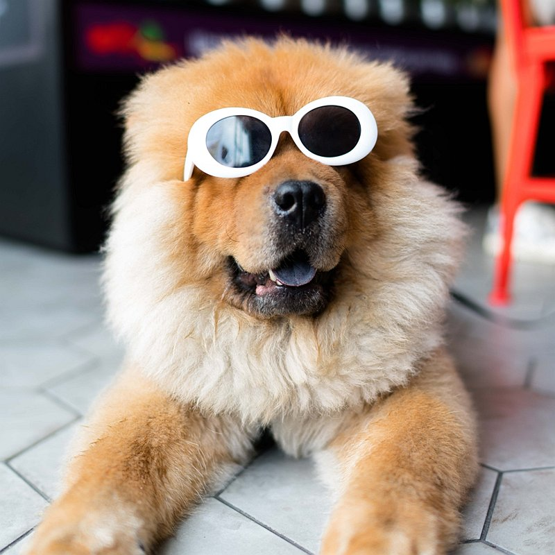 chien-budget-aliemntation-accessoires-soins-blog-crocandiz