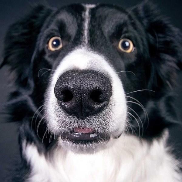 pâtisserie-grand-chien-crocandiz