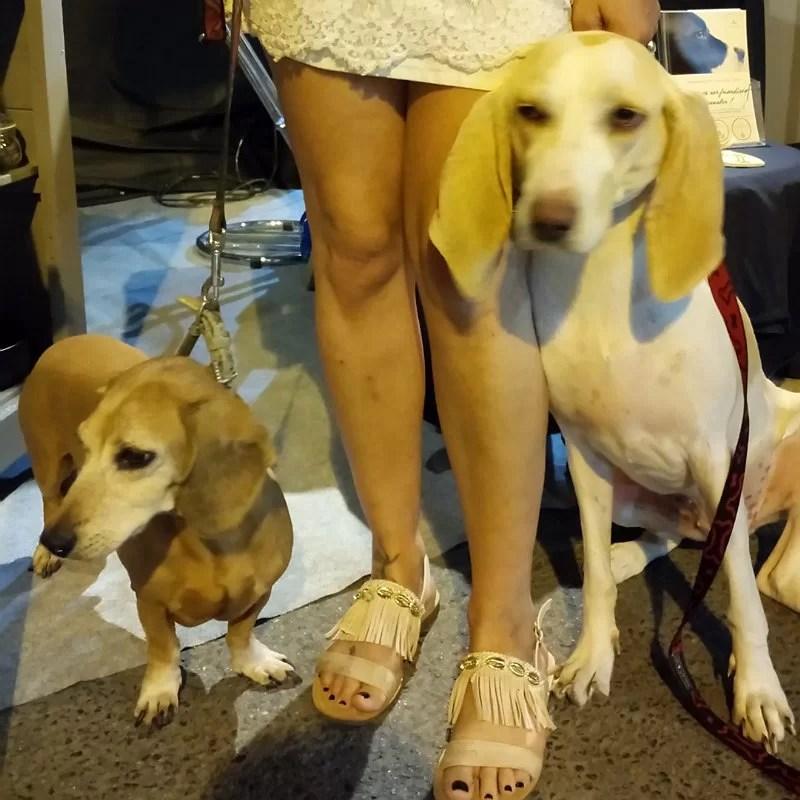 Foxy et Naoly-chiens-stand-crocandiz