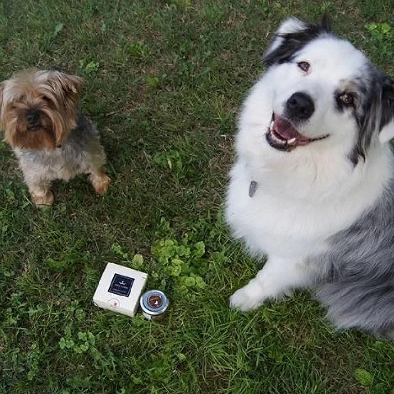 Lolly-Loupiot-chiens-gourmandises-crocandiz