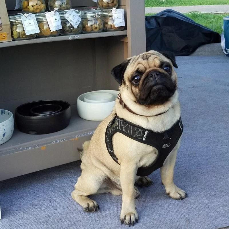 Maurice-chien-carlin-stand-crocandiz