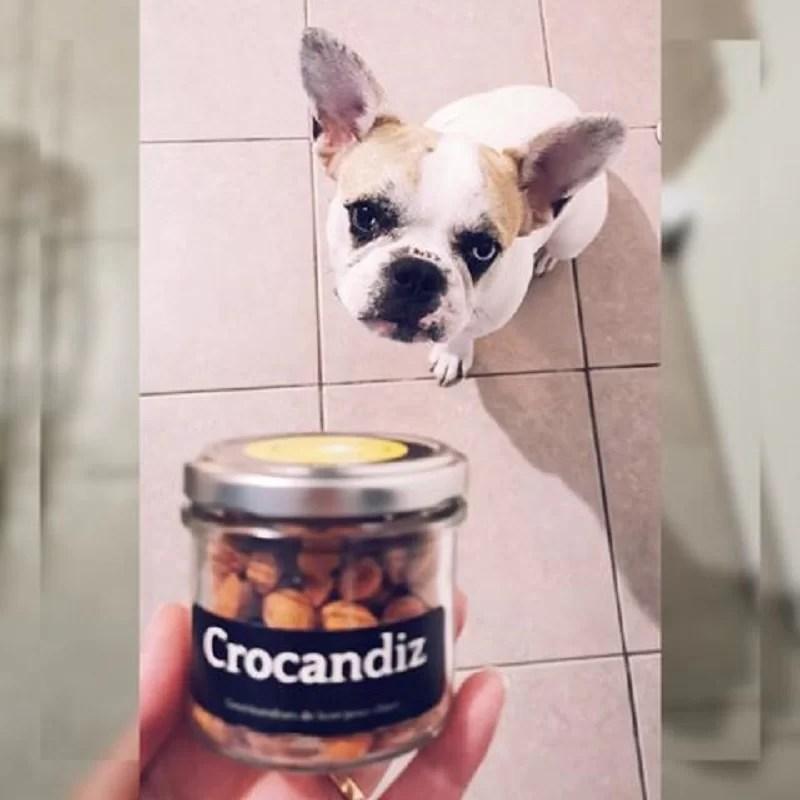Chien-gourmand-biscuit-naturel-crocandiz