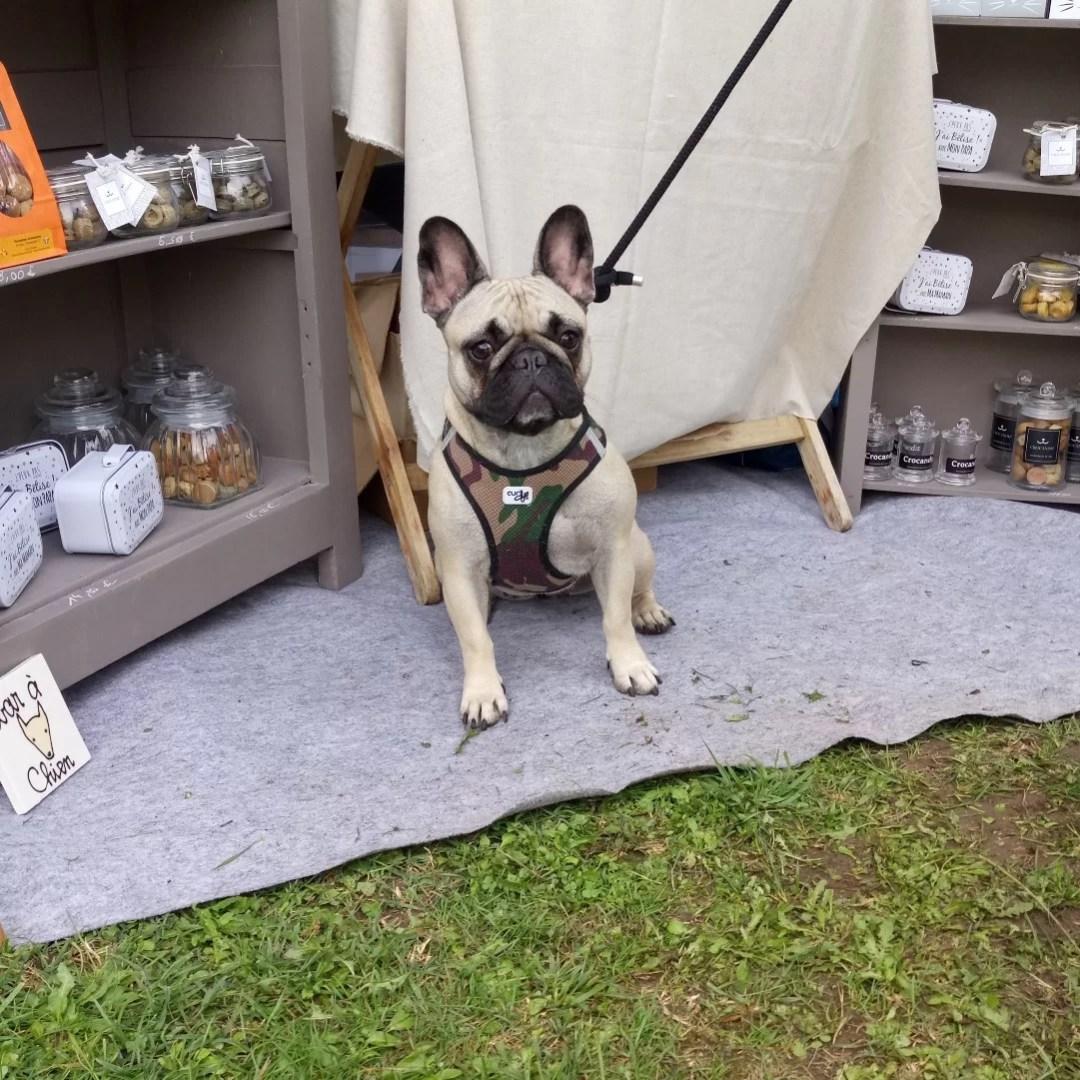 Wendy-chien-bouledogue-français-stand-crocandiz