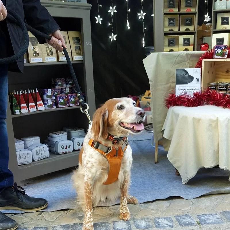 Téquila-épagneule-breton-stand-chien-crocandiz