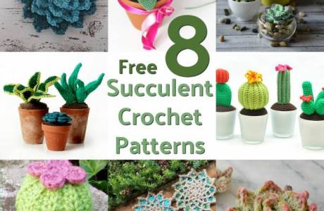 8 Free Succulent Crochet Patterns