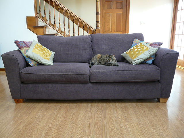 My cat comandeers the sofa for shedding