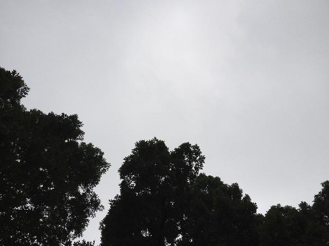 gray skies