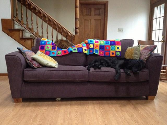crochetbug, Clooney on the dog sofa, crochet cat runner, crochet for pets