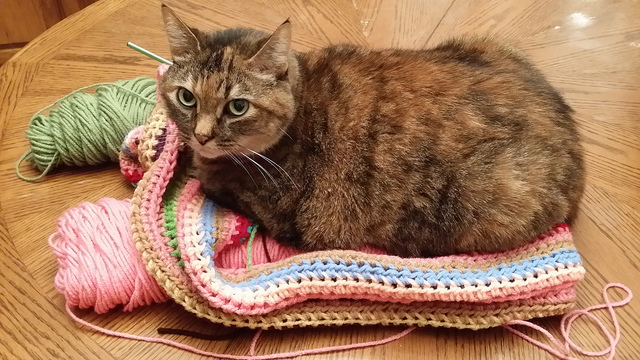 cat with a crochet cowl