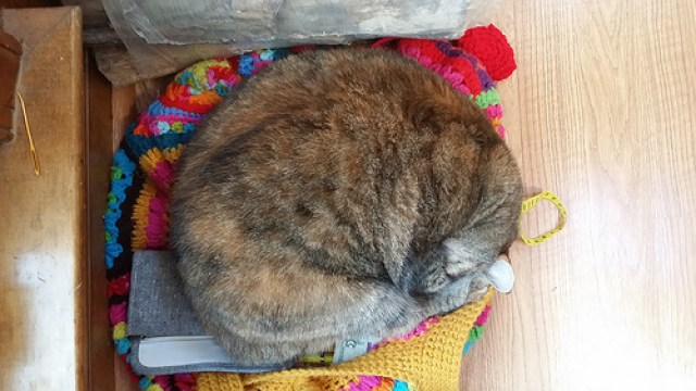 Stripes the cat napping on my crochet purse made of granny squares
