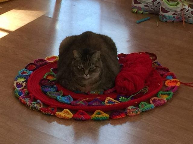 cat on a crochet mandala