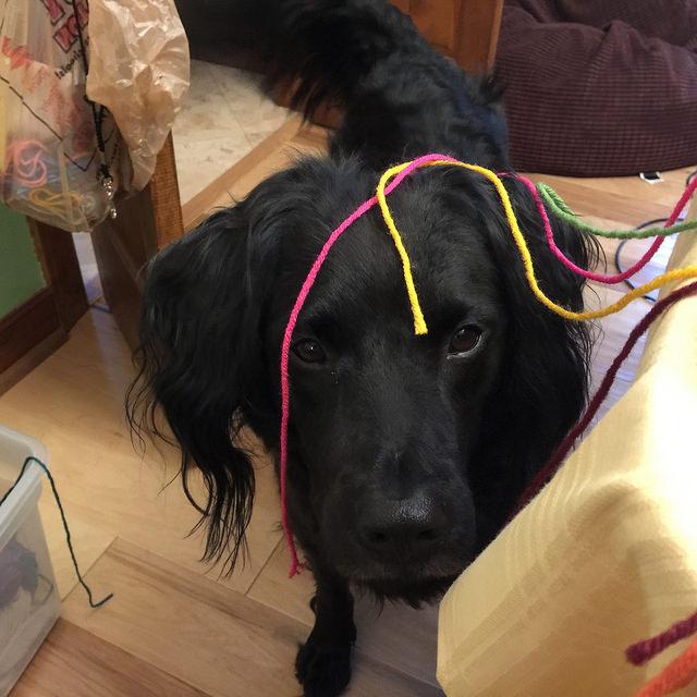 dog oversees crochet and yarn