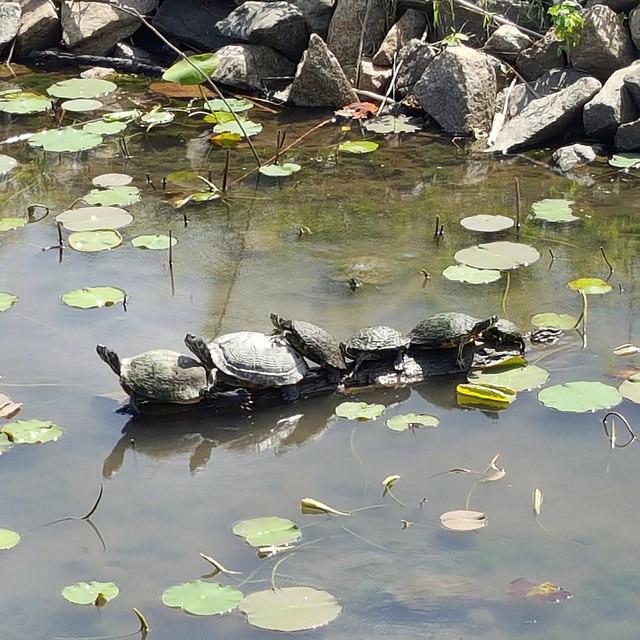 six turtles