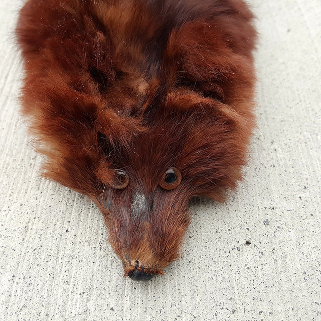 The face of the front most mink of Flora's mink stole