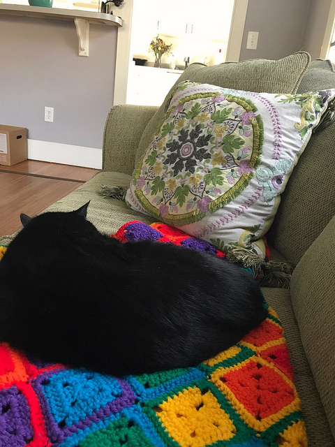 cat with a crochet blanket