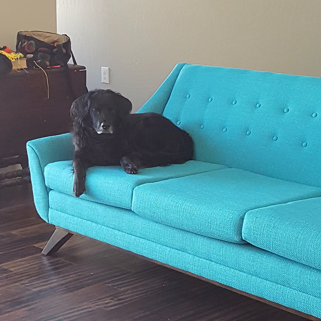 Clooney testing the new sofa