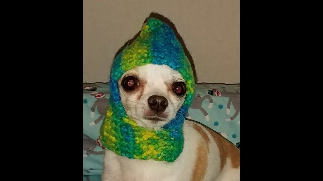 Puppy Dog Crochet Hat Pattern Crochet Chihuahua Hat Tutorial How To Crochet A Dog Hat Youtube