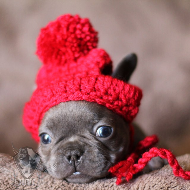 Puppy Dog Crochet Hat Pattern Handmade Crochet Pet Clothes Small Dog Breed French Bulldog Hat